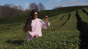 A young woman in sun glasses stands between rows on a tea plantation on a summer day. A young woman is in the park zone on a summer sunny day, a woman hides her stock video footage