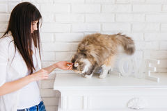Young woman pets her lovely fluffy cat Royalty Free Stock Images