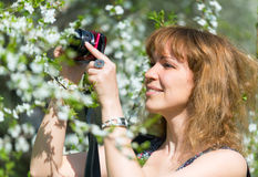 Young woman photographs cherry blossom Royalty Free Stock Images
