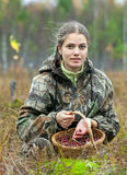 Young woman pick cranberry on a bog. Stock Photos