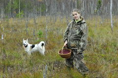 Free Young Woman Pick Cranberry On A Bog. Stock Image - 42486761