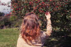 Young woman picking berries Royalty Free Stock Images