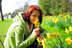 Young woman picking daffodils. Picture of a young woman picking daffodils in the field Royalty Free Stock Photography
