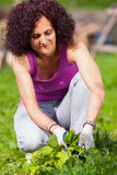 Young woman picking nettles in a basket Royalty Free Stock Photo