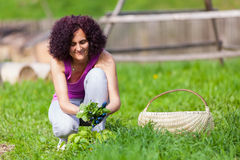 Young woman picking nettles in a basket Stock Images