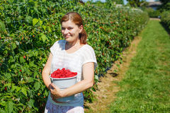 Young woman picking raspberries on pick a berry farm in Germany Royalty Free Stock Photo