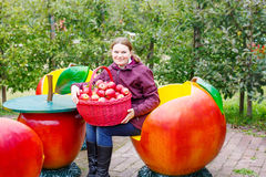 Young woman picking red apples in an orchard Royalty Free Stock Images