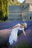 Young woman picking some lavender close to the medieval Abbey of stock photo
