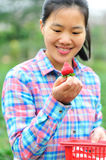 Woman picking strawberry in garden Royalty Free Stock Photography