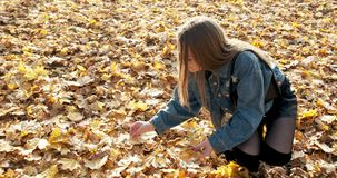 Young woman picks up fallen colorful autumn leaves. Girl collect yellow leaf stock video footage