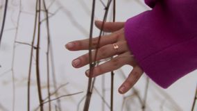 Young woman in pink coat walking in winter forest and touching branches. At cloudy day stock video footage