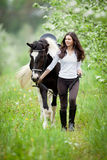Young woman and pinto horse in apple garden. Royalty Free Stock Photography