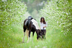 Young woman and pinto horse in apple garden. Royalty Free Stock Photos