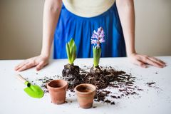 Young woman planting flower seedlings at home. Unrecognizable young woman planting flower seedlings at home stock photography