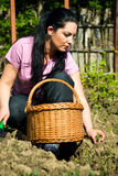 Young woman planting in a garden Royalty Free Stock Images