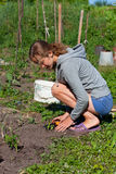 Young Woman Planting Seedlings of tomatoes royalty free stock images