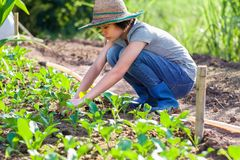 Young woman planting vegetable. In garden stock photos