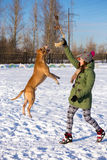 Young woman playing with American Pit Bull Terrier in winter Royalty Free Stock Photos