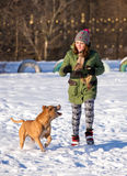 Young woman playing with American Pit Bull Terrier in winter Royalty Free Stock Image