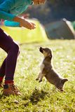 Young woman playing with a cute little puppy on a green grass in the camping. Young woman playing with a cute little puppy on a green grass in the campsite royalty free stock image