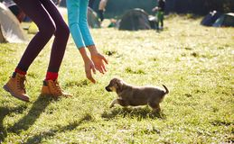 Young woman playing with a cute little puppy on a green grass in the camping. Young woman playing with a cute little puppy on a green grass in the campsite royalty free stock photography