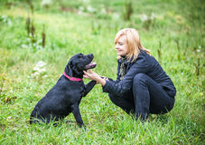 Young woman playing with dog Royalty Free Stock Photos