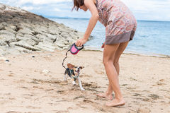 Young woman playing with dog pet beagle on beach of tropical island Bali, Indonesia. Girl and dog having fun on seaside. Young woman playing with dog pet beagle Stock Image
