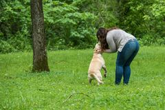 Young woman playing with a dog. Stock Photos