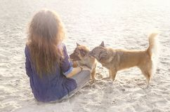 Young woman playing with dogs on the beach at sunset. Young woman playing with dogs on the beach Stock Image