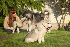 Young woman playing with the dogs. Stock Photos