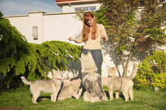 Young woman playing with the dogs. Royalty Free Stock Image