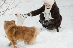 Young woman playing with dogs Royalty Free Stock Image