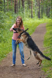 Young woman playing with German shepherd Royalty Free Stock Photography