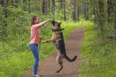 Young woman playing with German shepherd Royalty Free Stock Photo