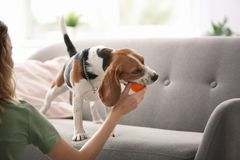 Young woman playing with her dog Royalty Free Stock Image