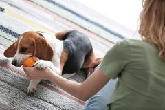 Young woman playing with her dog Royalty Free Stock Photos