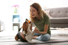 Young woman playing with her dog. At home royalty free stock photo