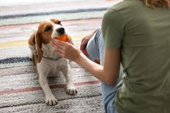 Young woman playing with her dog Royalty Free Stock Images