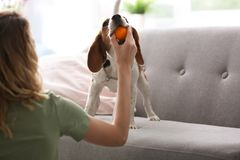 Young woman playing with her dog Stock Photography
