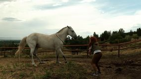A young woman playing with a horse. The horse jumps in different directions. stock video footage