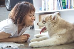 Young woman playing with husky dog Royalty Free Stock Image
