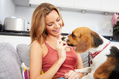 Young Woman Playing With Pet Dog At Home. Happy Young Woman Playing With Pet Dog At Home Giving Treat Stock Photo