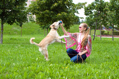 Young woman playing  with puppy in park. Sexy woman playing in park with golden retriever puppy Royalty Free Stock Image