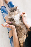 Young woman plays with cat laying on her knees. Young woman plays with fluffy cat laying on her knees. Charming family pets and people cosiness concept, view stock photo