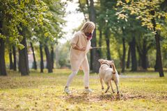 .A young woman plays with her dog Labrador in the park in the fall. Throws a stick to the dog. A young woman plays with her dog Labrador in the park in the fall stock photo