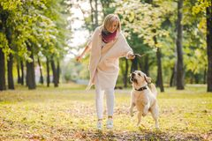.A young woman plays with her dog Labrador in the park in the fall. Throws a stick to the dog. A young woman plays with her dog Labrador in the park in the fall royalty free stock photo