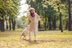 .A young woman plays with her dog Labrador in the park in the fall. Throws a stick to the dog. A young woman plays with her dog Labrador in the park in the fall royalty free stock images
