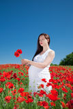 Young woman plucks flowers Stock Image