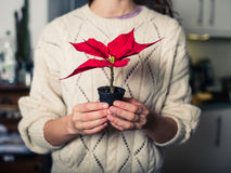 Young woman with poinsettia Stock Photo