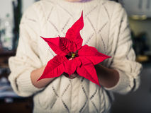 Young woman with poinsettia Stock Images